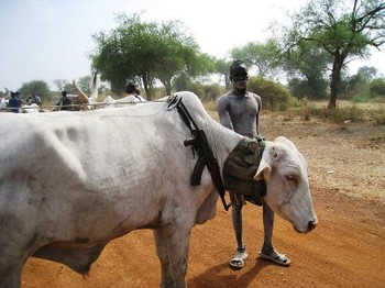 File photo: A cattle herder in South Sudan