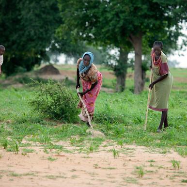Katela farmers concerned over lack of rain