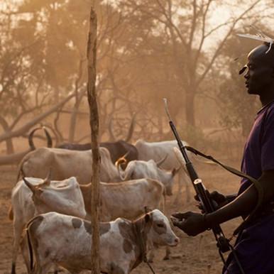 مقتل شخصين في غارة لنهب الماشية بمقاطعة كونقور بولاية جونقلي