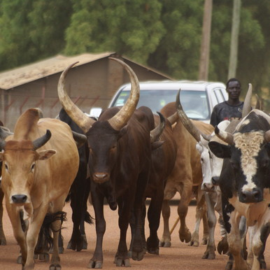 Pastoralists agree to leave Kajo-Keji County within 7 days