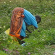 File photo: A woman picking green vegetables in her farm in Bor on February 28, 2017. (Radio Tamazuj)